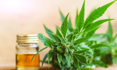 Cannabidiol Oil Guide