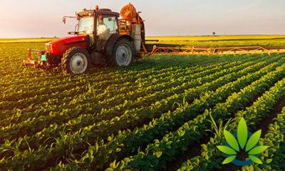 2018 Farm Bill Will Instantly Reshape Hemp, CBD Industry Starting January 1, 2019