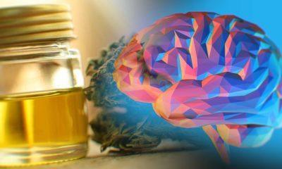 CBD Oil For Memory Benefits