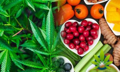 CBD As Alternative Medicine