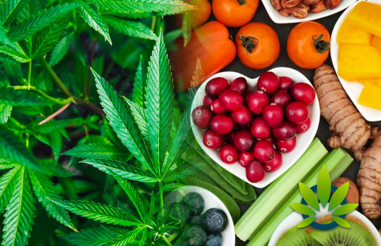 CBD As Alternative Medicine