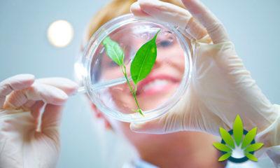 CBDPure: Best Scientifically Tested CBD Oil and Hemp Cannabidiol Products?
