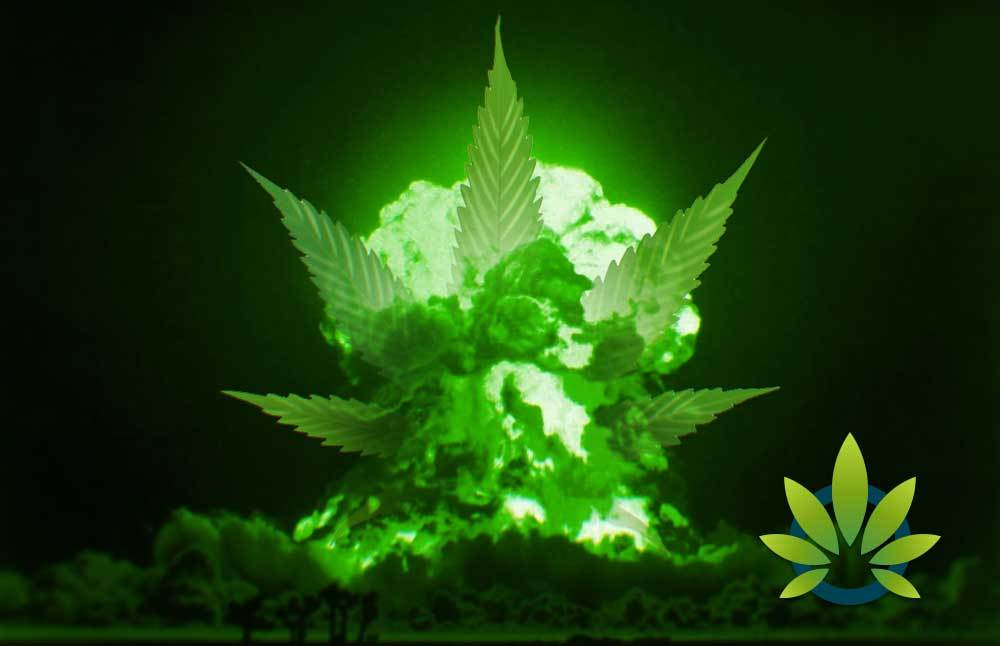 Are Drugs Weapons Of Mass Destruction And Is CBD A Healthier Alternative To Fenatyl?