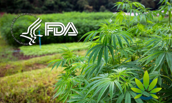 Update Issued By FDA on CBD Rulemaking Status Makes Its Way to Congress
