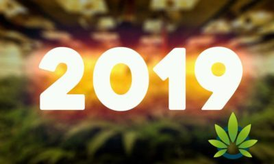Five Cannabis Industry Predictions for 2019