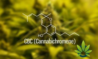 Cannabichromene (CBC): Little Known Facts About CBC Cannabinoid Health Benefits