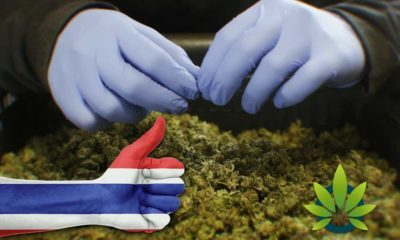 Medical Use Of Marijuana Earns Approval In Thailand For Legalization Along With Kratom