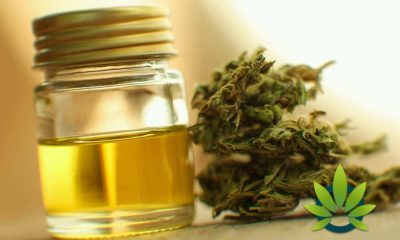 New to CBD Oil? Here's the Importance of Using High-Quality Cannabis Oil Supplementation