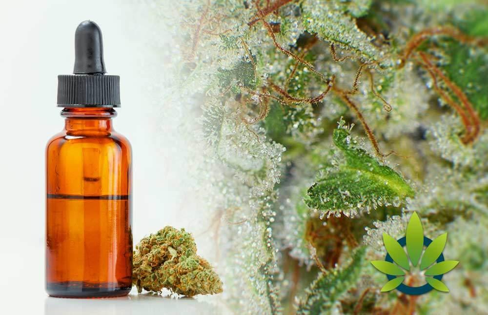 CBD Terpenes: Cannabis Terpenes List Guide to Enhance CBD Effects
