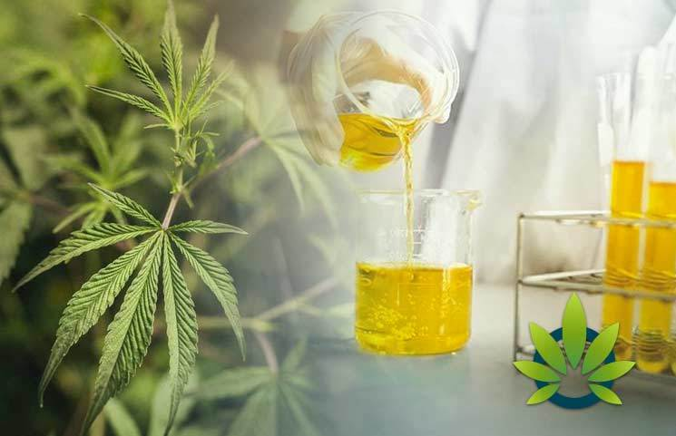 CBD Distillate: A Concise Explanation of Hemp Cannabidiol