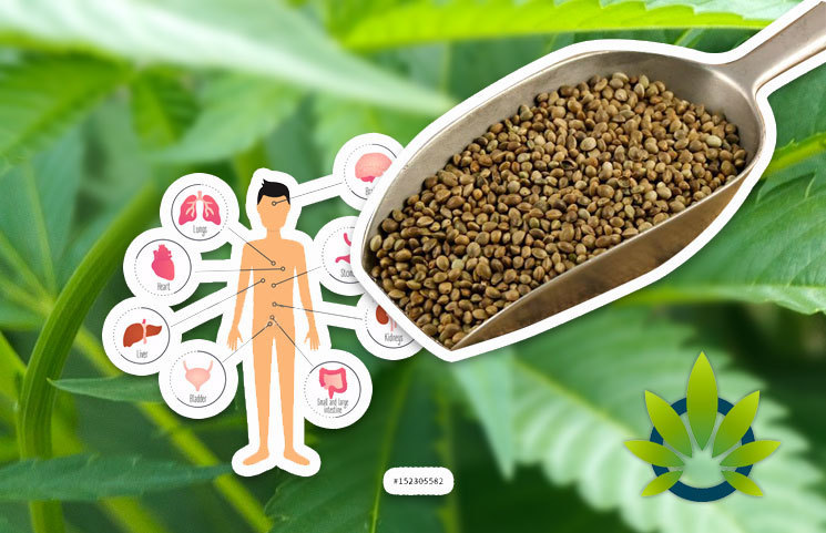 Analyzing Hemp's Naturally Versatile, Diverse and Mighty Power as the Plant of the Future