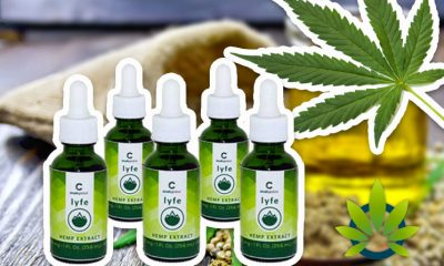 Are Global Crush CBD Oil Products and Cannabidiol Business Legit?