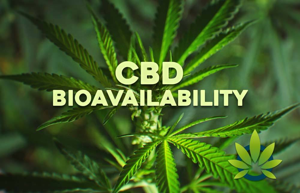 CBD Bioavailability: How Cannabidiol Effectiveness Works and Its Impact on Benefits