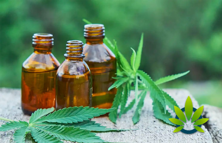 What is Hemp: How is it Different from Marijuana Physically, Chemically, Legally, and Historically