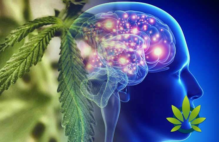 cannabis and epilepsy a 176 year old connection