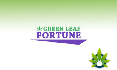 Marijuana Stocks - Part 5