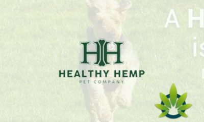 healthy hemp pet