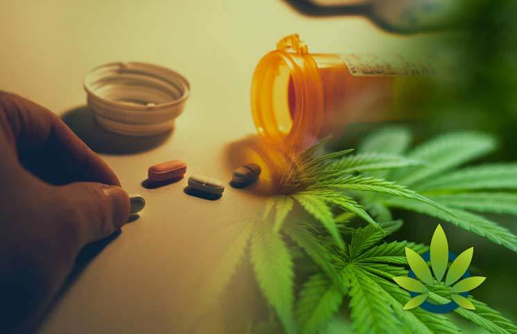 Cannabis Doctor Shares How Medical Marijuana And CBD Can Help The Opiate Addiction Crisis