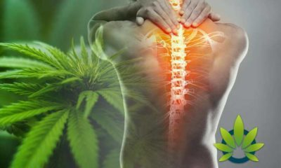 Key Cannabinoid Receptors that Play a Critical Role in Pain Relief and Inflammation Control