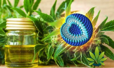 Liposome Benefits Prove to be a Perfect Pair for CBD (Cannabidiol)