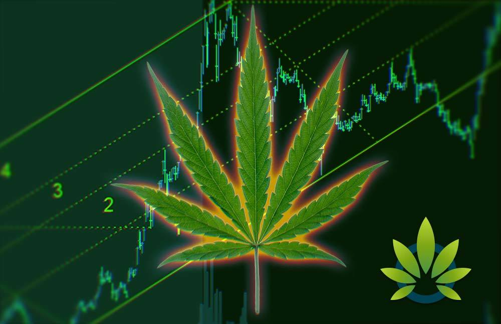 Top 10 Cannabis Market Forecasts for 2019: What to Watch for in the Marijuana Industry This Year