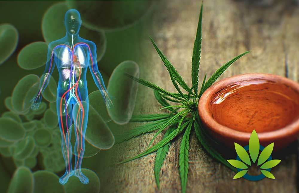 Waiting for CBD to Work in the Body – What to Expect