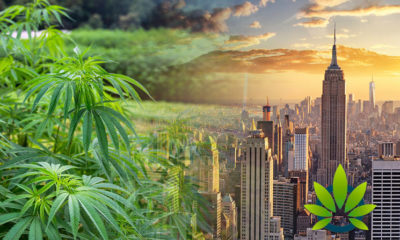 New York City Bans Restaurants From Selling CBD Infused Food, Deems Cannabidiol As Food Additive