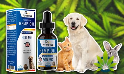 Pet Pawsitive Hemp Oil for Pets Promises to Offer Pure Organic Dogs and Cats CBD Products
