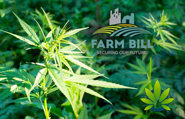 Latest News Post Farm Bill 2018: The Fortune Of Hemp And CBD (Cannabidiol) Businesses