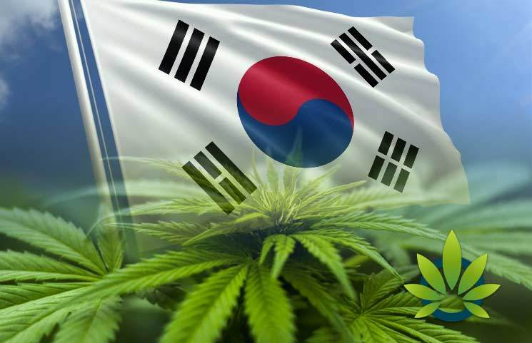 How Has South Korea's Medical Marijuana Law That Was Effective in March Gone So Far?