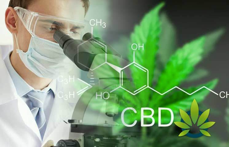 New 2019 CBD Research: This Year's Cannabidiol Developments, Research, and Publications