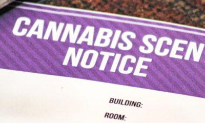 cannabis-cbd-college-campus-crackdown