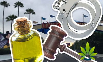 69-Year Old Grandmother Arrested for Hemp-Derived CBD Oil Possession Set to Sue Disney World