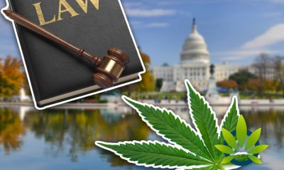 A Look at 11 New Cannabis Laws in Washington from the Latest Senate and House Bills