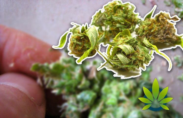CBD Oil Buyer Beware Risks are Rising Due to Dangerous Man-Made Synthetic Cannabinoids