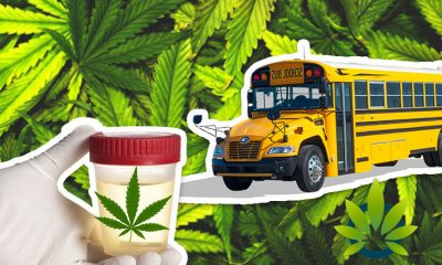 CBD Oil Impacts Drug Test for Missouri School Employee After Being Shocked at Failing the Screening