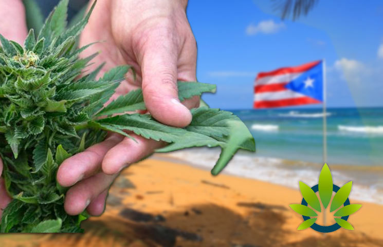 Coca-Cola Billionaire, Swissx CEO Heads to Puerto Rico with Millions Worth of Hemp Plants