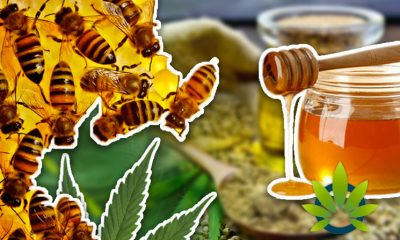 Father in Need Motivates Young Beekeeper to Create Happy Organics CBD-Infused Honey Products