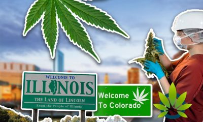 Illinois Medical Marijuana Market Growth Could Compete with Colorado Per Brightfield Group Report