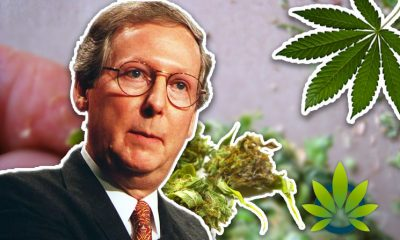 Mitch McConnell Praises Hemp as Promising Alternative to Tobacco While Proposing 18 to 21 Age Limit Increase to Buy