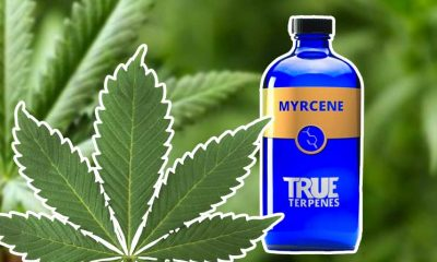 Mycrene Terpene: Discover the Terpenoid Entourage Effect Health Benefits of Mycrene