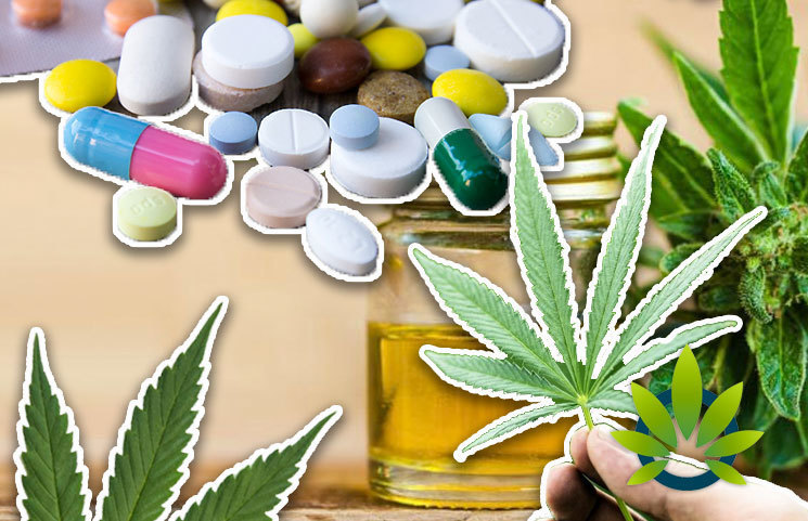 The World Waking Up to the Wonders of Cannabis as Sales Bypass Alcohol as Consumption Dims