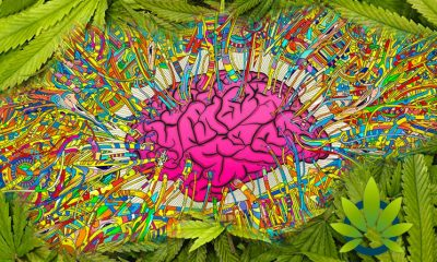 Potential Psychoactive Effects of CBD