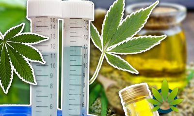 Professional Pot Pundits in Agreement on CBD Products Not Affecting Drug Test Results for THC
