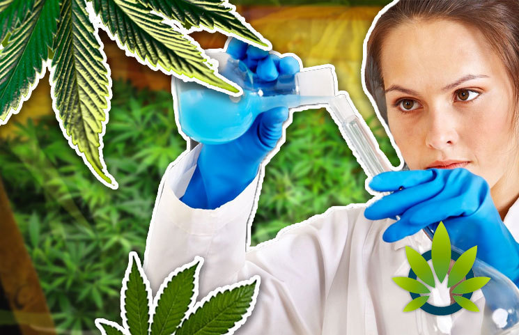 Top Hard to Ignore Health Claims About Medical Marijuana Rooted in Scientific Evidence