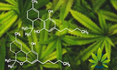 CBD's Entourage Effect is Real: The Importance of Knowing the All Active Cannabis Compounds