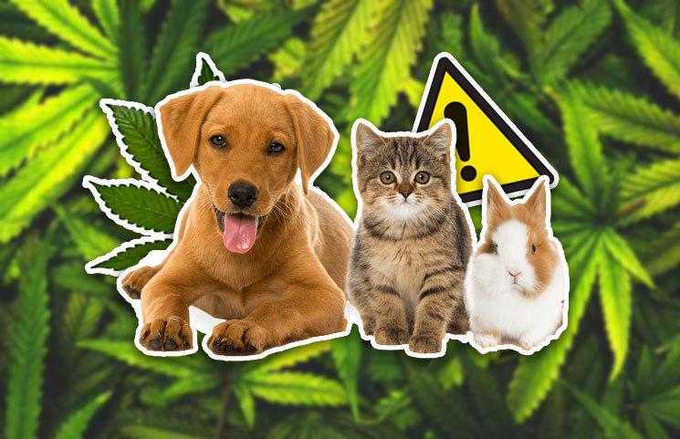 cbd risks for pets
