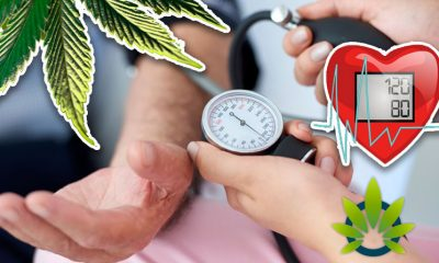 cbd for hypertension