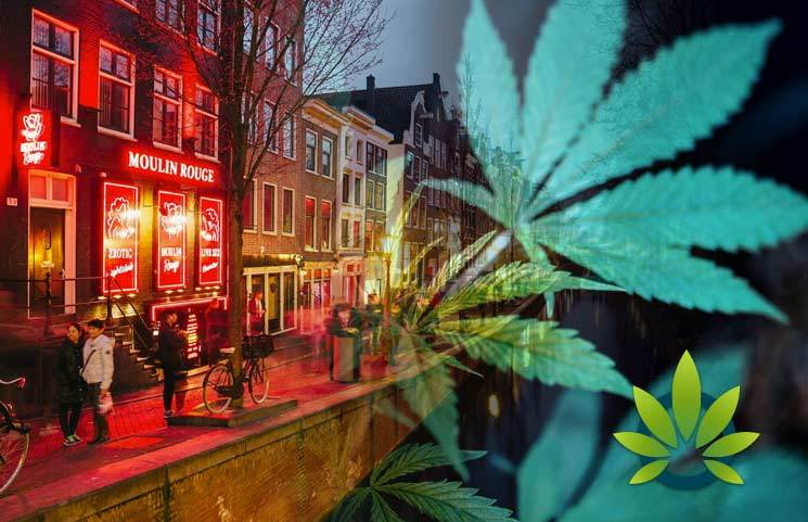 Amsterdam: The City of Medical Marijuana and Cannabis Education?