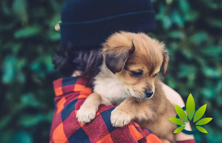 CBD to soon be recommended by vets for pets in California